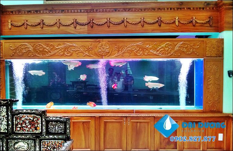 hồ cá rồng cao cấp