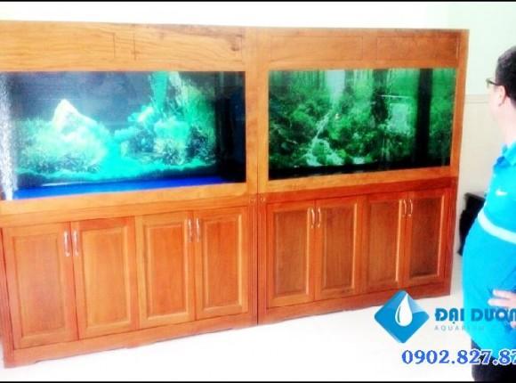 Hồ cá rồng đôi bạn anh Hưng Quận Phú Nhuận
