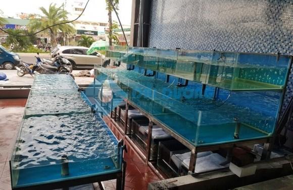kiểu dáng bể hải sản đẹp 4